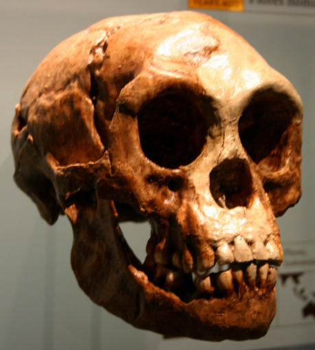 "Ryan Somma, <a href=""https://creativecommons.org/licenses/by-sa/2.0/deed.en"">cc by-sa 2.0</a> 			(Zdroj: <a href=""https://commons.wikimedia.org/wiki/File:Homo_floresiensis.jpg"">Wikimedia Commons</a>)"